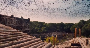 Noah birds